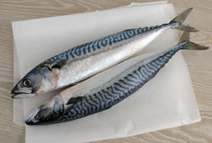 Fresh mackerel Royalty Free Stock Photos