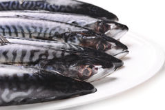 Fresh Mackerel Royalty Free Stock Image