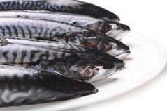 Fresh Mackerel Royalty Free Stock Image