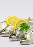 Fresh Mackerel. With Lemon isolated Royalty Free Stock Photography