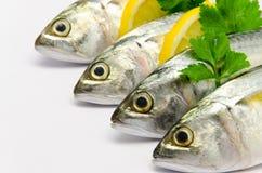 Fresh Mackerel. With Lemon isolated Stock Photo