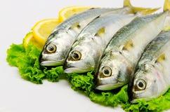 Fresh Mackerel. With Lemon isolated Royalty Free Stock Image