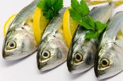 Fresh Mackerel. With Lemon isolated Stock Photos