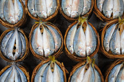 Fresh mackerel in basket in market ,  Thailand Royalty Free Stock Image