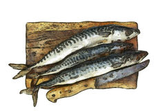 Fresh mackerel on chopping board Stock Image