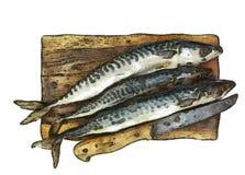 Fresh mackerel on chopping board Stock Image