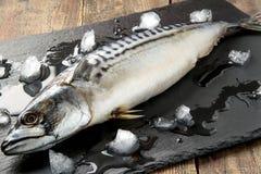 Fresh mackerel cooled with ice Stock Photo
