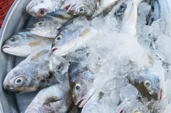 Fresh mackerel in country market of thailand Stock Images