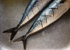 Fresh mackerel. Cutting prepare for cook Royalty Free Stock Photo