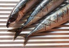 Fresh mackerel. Cutting on sink Royalty Free Stock Images