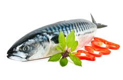 Fresh mackerel decorated with pepper and basil Royalty Free Stock Photo