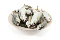Fresh mackerel on dish fishes isolated on white  background   ,Thailand. Fresh mackerel on dish fishes isolated on white  background  ,Thai seafood background Royalty Free Stock Photography