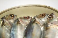 Fresh mackerel on dish Stock Image