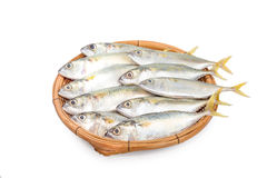 Fresh mackerel fish in basket on white background.  Stock Image