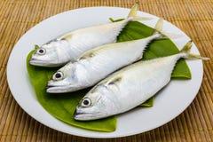 Fresh mackerel fish. Close up fresh mackerel fish on white plate Stock Photography