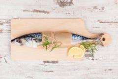 Fresh mackerel fish. Royalty Free Stock Images