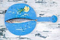 Fresh mackerel fish. Stock Photos