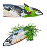 Fresh mackerel fish with dill Stock Images