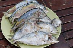 Fresh mackerel fish Stock Photos