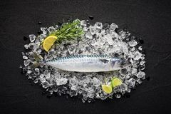 Fresh mackerel fish on ice on a black stone table. Top view Royalty Free Stock Photos
