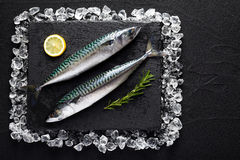 Fresh mackerel fish on ice on a black stone table. Top view Stock Photography
