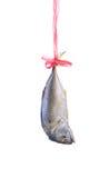 Fresh mackerel fish isolated on white backg Royalty Free Stock Photo
