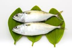 Fresh mackerel fish. Isolated on the white background Royalty Free Stock Photos