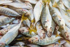 Fresh mackerel fish at the fresh market.Thailand. Fresh mackerel fish at the fresh market.Thailand Royalty Free Stock Photos