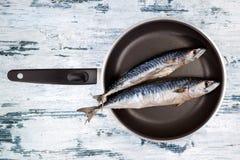 Fresh mackerel fish on pan. Stock Photos