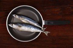 Fresh mackerel fish on pan. Royalty Free Stock Images