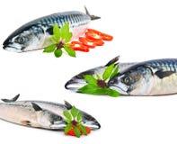 Fresh mackerel fish with parsleyand spices Stock Photos