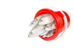 Fresh mackerel fish in plastic bucket Stock Photography