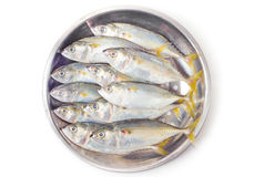 Fresh mackerel fish on salver Stock Image