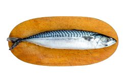 Fresh Mackerel Fish, Scomber scrombrus, on Wooden Chopping Block Board. Fresh Mackerel Isolated.  Royalty Free Stock Photography