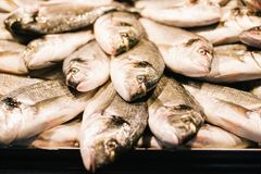 Fresh mackerel fish at the seafood market, Traditional fish in market. Soft focus - Abstract blur for background Royalty Free Stock Photos