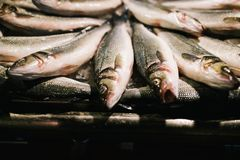 Fresh mackerel fish at the seafood market, Traditional fish in market. Soft focus - Abstract blur for background Royalty Free Stock Images