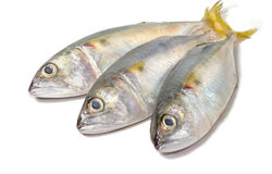 Fresh mackerel fish on white Royalty Free Stock Images