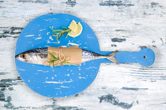 Fresh mackerel fish in white and blue. Stock Image