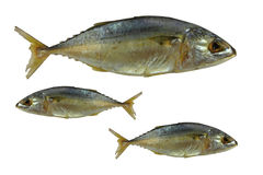 Free Fresh Mackerel Fishes Royalty Free Stock Photography - 22174647