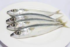 Fresh mackerel fishes. On white background Stock Images