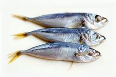 Fresh mackerel fishes on white background. Three fish-mackerel Stock Photo