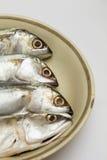 Fresh mackerel head on dish Royalty Free Stock Photography