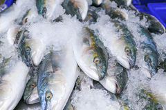 Fresh mackerel in the market.  Royalty Free Stock Image