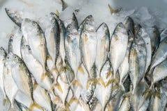 Fresh mackerel at market Stock Photo