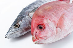 Fresh Mackerel and Red Snapper. Close up photo of raw Mackerel and Red Snapper Royalty Free Stock Photo