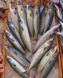 Fresh mackerel (scomber) for sale Royalty Free Stock Photo
