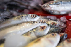 Fresh mackerel at seafood market. Thiland Stock Photos