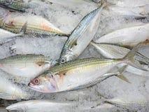 Fresh mackerel. Sold in the Asian market Royalty Free Stock Photo