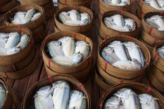 Fresh mackerel. Sold in market stock photos