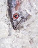 Fresh Mackerel Tuna III Stock Images